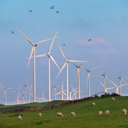 Wind Turbine Farms can make many Casualties during Bird Migration